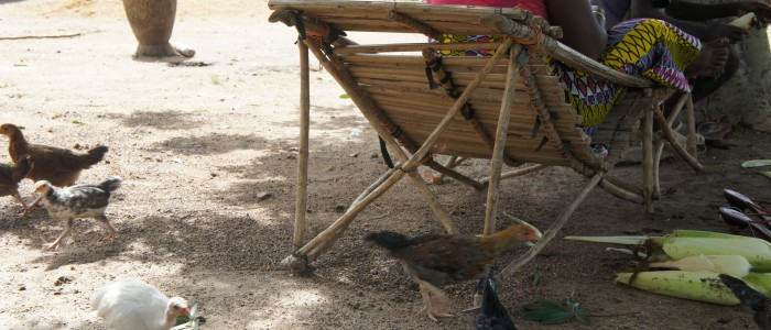 3 hens search for food on the ground behind a chair.